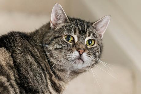 猫の写真素材 [FYI03425084]