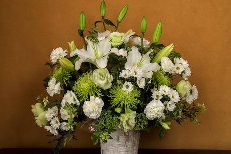 様々な白い花の写真素材 [FYI03425331]