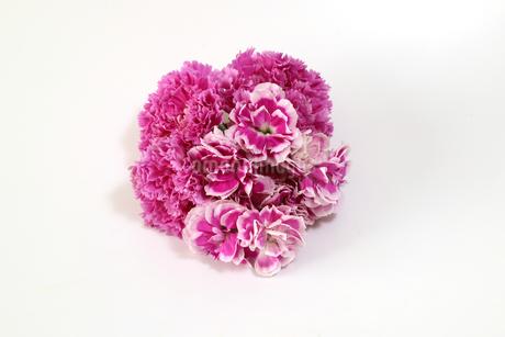カーネーションの花束の写真素材 [FYI03425337]
