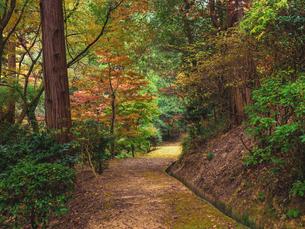 秋に楓が色づき始めた山道の様子 登山の写真素材 [FYI03426251]