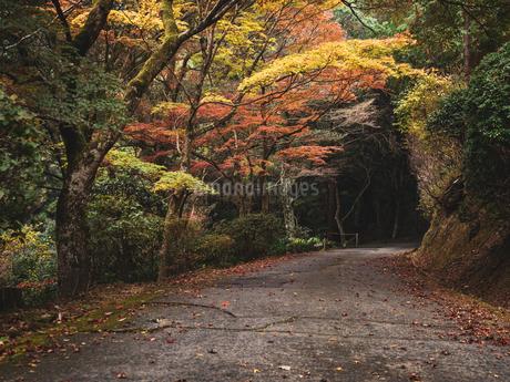 秋に楓が色づき始めた山道の様子 登山の写真素材 [FYI03426256]