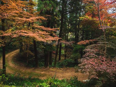 秋に楓が色づき始めた山道の様子 登山の写真素材 [FYI03426257]