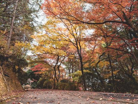 秋に楓が色づき始めた山道の様子 登山の写真素材 [FYI03426267]