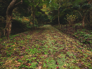 木々に囲まれた山道の様子の写真素材 [FYI03426269]