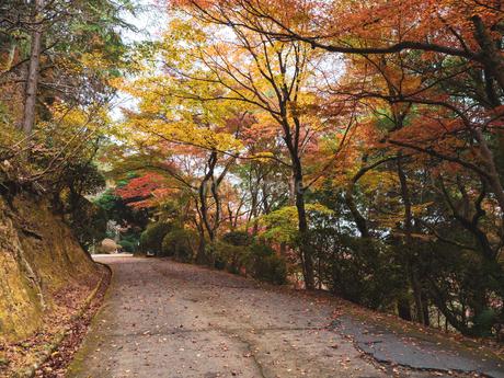 秋に楓が色づき始めた山道の様子 登山の写真素材 [FYI03426271]