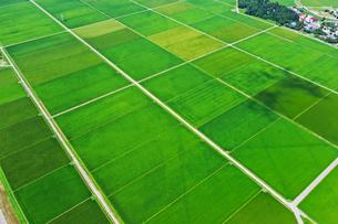 新潟県の田園風景の写真素材 [FYI03426279]