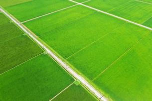 新潟県の田園風景の写真素材 [FYI03426280]