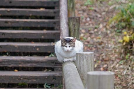 前足を揃えて手摺に座る猫の写真素材 [FYI03426415]
