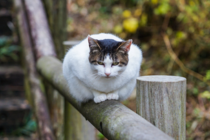 前足を揃えて手摺に座るネコの写真素材 [FYI03426417]