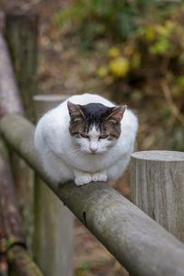 手摺に前足を揃えて座るネコの写真素材 [FYI03426418]