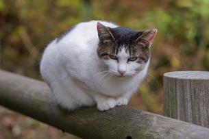 手摺に前足を揃えて座る猫の写真素材 [FYI03426419]