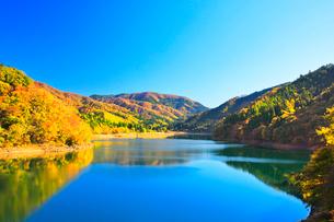 秋の九頭竜湖と紅葉の山並みに快晴の空の写真素材 [FYI03426422]