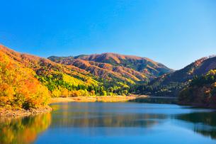 秋の九頭竜湖と紅葉に快晴の空の写真素材 [FYI03426423]
