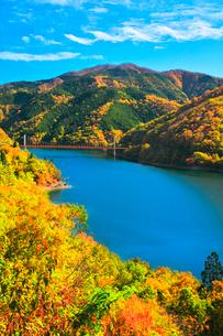 秋の九頭竜湖 紅葉に夢の架け橋を望むの写真素材 [FYI03426425]