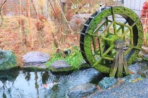 苔の生えた水車の写真素材 [FYI03426669]