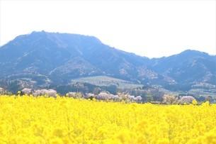 春の里山の写真素材 [FYI03426685]