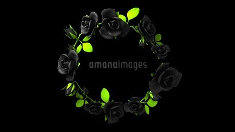 Black roses frame on black text spaceのイラスト素材 [FYI03426780]