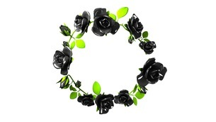Black roses frame on white text spaceのイラスト素材 [FYI03426782]