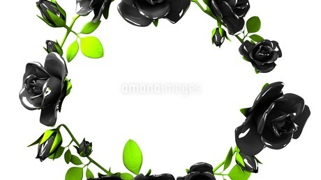 Black roses frame on white text spaceのイラスト素材 [FYI03426783]