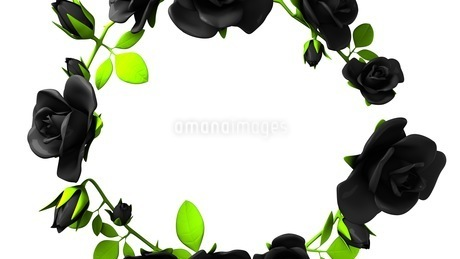 Black roses frame on white text spaceのイラスト素材 [FYI03426785]
