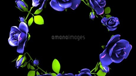 Blue roses frame on black text spaceのイラスト素材 [FYI03426787]