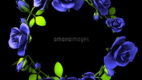 Blue roses frame on black text spaceのイラスト素材 [FYI03426789]