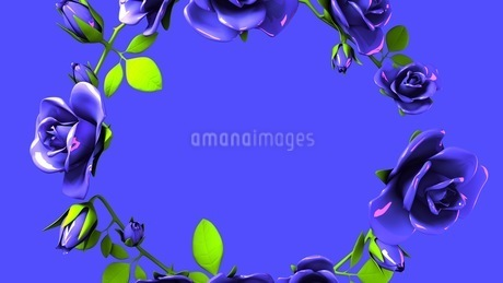 Blue roses frame on black text spaceのイラスト素材 [FYI03426791]