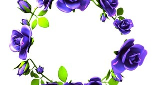 Blue roses frame on white text spaceのイラスト素材 [FYI03426795]