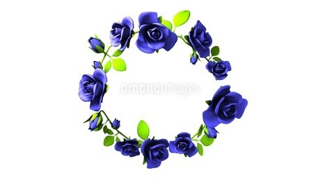 Blue roses frame on white text spaceのイラスト素材 [FYI03426796]