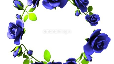 Blue roses frame on white text spaceのイラスト素材 [FYI03426797]