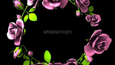 Pink Roses Frame On Black Text Spaceのイラスト素材 [FYI03426801]