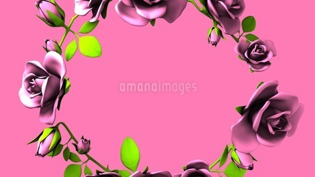 Pink Roses Frame On Pink Text Spaceのイラスト素材 [FYI03426805]