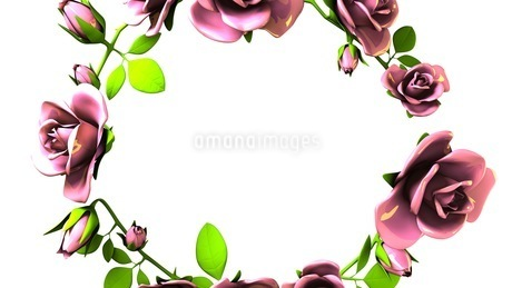 Pink Roses Frame On White Text Spaceのイラスト素材 [FYI03426807]