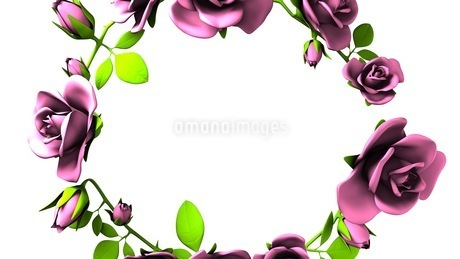 Pink Roses Frame On White Text Spaceのイラスト素材 [FYI03426809]
