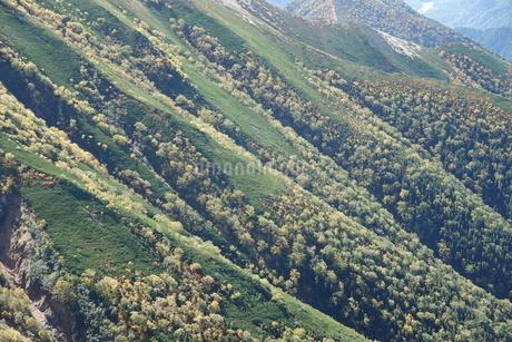 北アルプスの紅葉の写真素材 [FYI03426917]