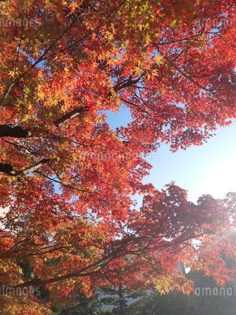 秋の陽射しの写真素材 [FYI03427076]