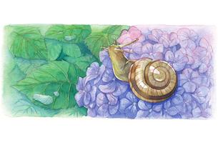 日本の年中行事イラスト:6月/かたつむりと紫陽花のイラスト素材 [FYI03427223]