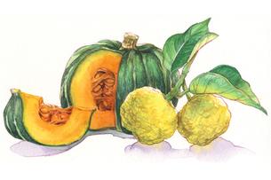 日本の年中行事イラスト:12月/かぼちゃと柚子のイラスト素材 [FYI03427229]
