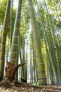 竹林の春の写真素材 [FYI03427410]