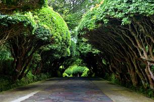 樹木のトンネルの写真素材 [FYI03427524]