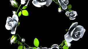 White Roses Frame On Black Text Spaceのイラスト素材 [FYI03427585]