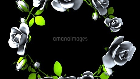 White Roses Frame On Black Text Spaceのイラスト素材 [FYI03427586]