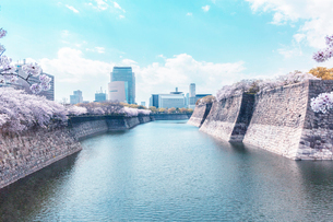 大阪城公園の桜と濠の写真素材 [FYI03427662]