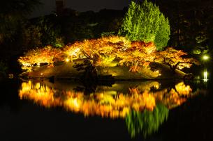 栗林公園の秋の夜の紅葉ライトアップの写真素材 [FYI03427753]