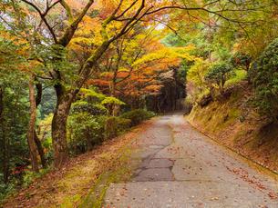 秋に楓が色づき始めた山道の様子 登山の写真素材 [FYI03427759]