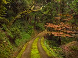 秋に楓が色づき始めた山道の様子 登山の写真素材 [FYI03427760]