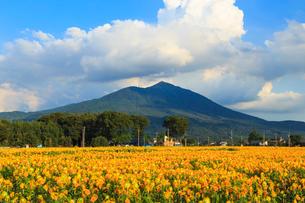 筑波山と明野ひまわりの里の写真素材 [FYI03428392]