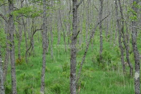釧路湿原の森の写真素材 [FYI03428845]