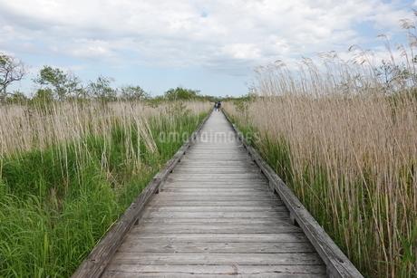 釧路湿原の木道の写真素材 [FYI03428846]