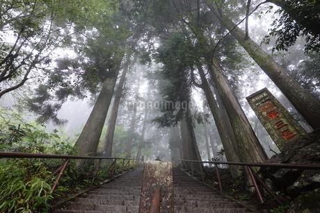 霧の大山(丹沢)登山道の写真素材 [FYI03428866]